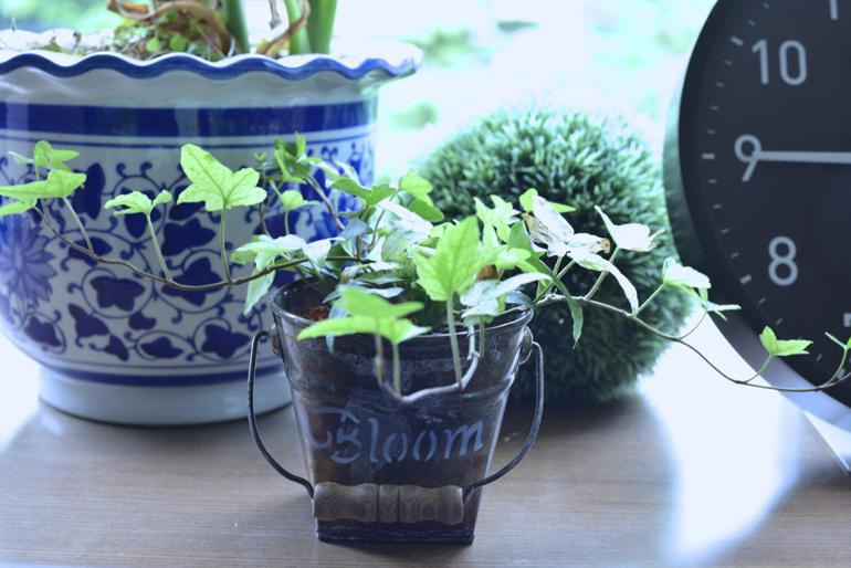 手前の植物が松居商店の商品。植物だけではなく、器まで可愛いものを提案するお店