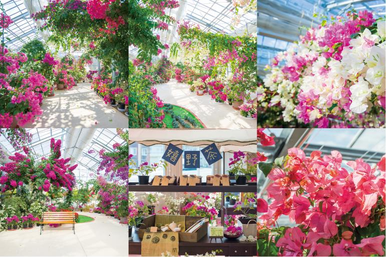 色鮮やかに咲き誇るブーゲンハウス、園内の様子